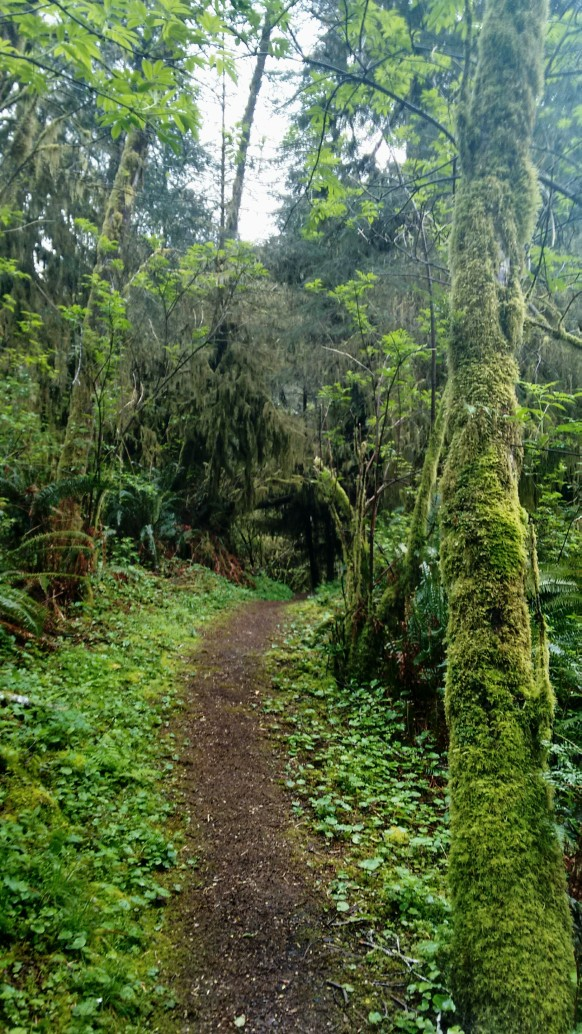 Amanda Trail